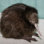 373124 Kiwi 150x150 Os animais mais fofos do mundo: fotos