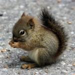 373124 esquilo 150x150 Os animais mais fofos do mundo: fotos