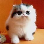 373124 gato fofo 150x150 Os animais mais fofos do mundo: fotos