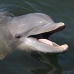373124 golfinho 150x150 Os animais mais fofos do mundo: fotos