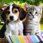 373124 lindos meigos e peludos 150x150 Os animais mais fofos do mundo: fotos