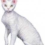 374109 devon rex branco 150x150 Fotos de gatos de raça