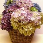 377930 Decoração com flores secas dicas ideias fotos 4 150x150 Decoração com flores secas   dicas, ideias, fotos