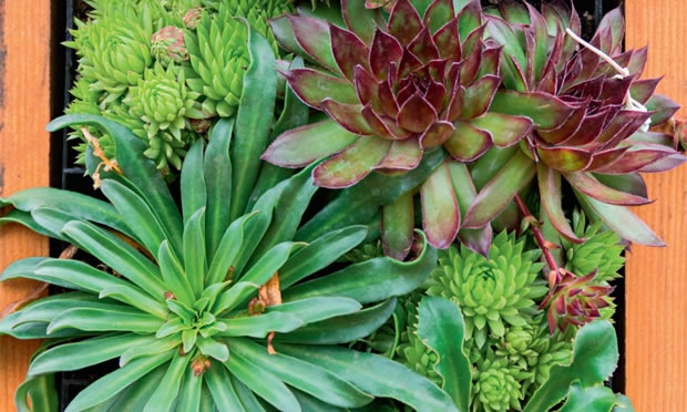 imagens jardins flores:Fotos de Paisagens Natureza, Jardins, Plantas (Lindas Imagens) 3