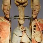 389710 12 150x150 Anatomia humana   Fotos