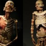 389710 13 150x150 Anatomia humana   Fotos