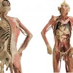 389710 14 150x150 Anatomia humana   Fotos