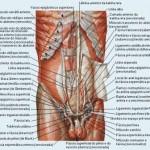 389710 3 150x150 Anatomia humana   Fotos