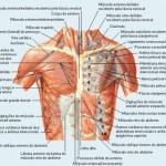 389710 5 150x150 Anatomia humana   Fotos