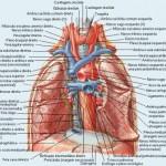 389710 6 150x150 Anatomia humana   Fotos