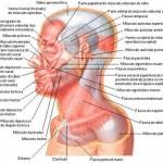 389710 7 150x150 Anatomia humana   Fotos