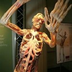 389749 10 150x150 Corpo humano – Fotos