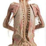 389749 14 150x150 Corpo humano – Fotos