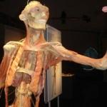 389749 6 150x150 Corpo humano – Fotos