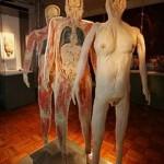 389749 9 150x150 Corpo humano – Fotos