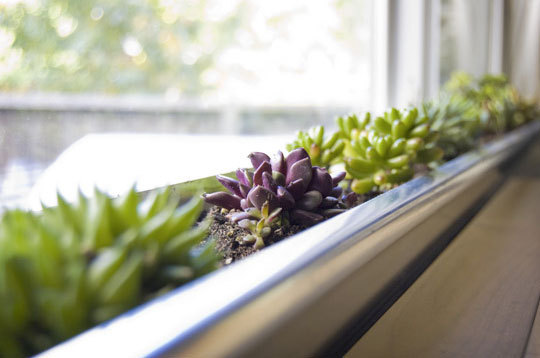 Apartment Garden For Beginners Trend Alert Wedding Succulents