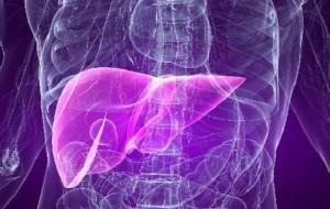 Obesidade e doenças hepáticas podem ser atentadas por microorganismos