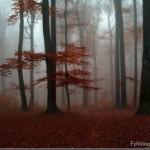 393720 As florestas mais lindas do mundo 102 150x150 Florestas mais bonitas no mundo   fotos