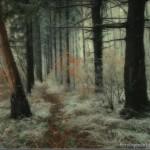 393720 As florestas mais lindas do mundo 12 150x150 Florestas mais bonitas no mundo   fotos