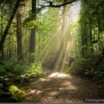 393720 As florestas mais lindas do mundo 122 150x150 Florestas mais bonitas no mundo   fotos