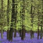 393720 As florestas mais lindas do mundo 142 150x150 Florestas mais bonitas no mundo   fotos