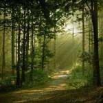 393720 As florestas mais lindas do mundo 22 150x150 Florestas mais bonitas no mundo   fotos