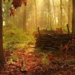 393720 As florestas mais lindas do mundo 52 150x150 Florestas mais bonitas no mundo   fotos