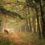 393720 As florestas mais lindas do mundo 62 150x150 Florestas mais bonitas no mundo   fotos
