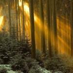 393720 As florestas mais lindas do mundo 73 150x150 Florestas mais bonitas no mundo   fotos