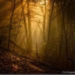 393720 As florestas mais lindas do mundo2 150x150 Florestas mais bonitas no mundo   fotos