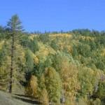 393720 Floresta Boreal do Canadá 150x150 Florestas mais bonitas no mundo   fotos