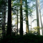 393720 Floresta Temperada da China 150x150 Florestas mais bonitas no mundo   fotos