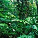 393720 Floresta tropical equatorial na Bacia do Congo 150x150 Florestas mais bonitas no mundo   fotos