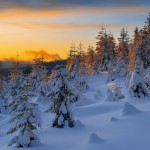 393720 floresta boreal 150x150 Florestas mais bonitas no mundo   fotos