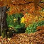 393720 florestas mais bonitas do mundo 1 150x150 Florestas mais bonitas no mundo   fotos