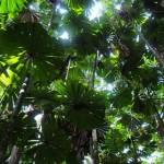 393720 florestas mais bonitas do mundo 13 150x150 Florestas mais bonitas no mundo   fotos
