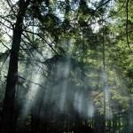 393720 florestas mais bonitas do mundo 9 150x150 Florestas mais bonitas no mundo   fotos