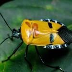 395104 Besouro com face humana na casco 150x150 O mundo dos insetos: fotos