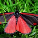 395104 borboleta 150x150 O mundo dos insetos: fotos