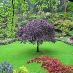 403984 Butchart Gardens e fica no Canadá na Columbia Britânic 150x150 Jardins mais famosos do mundo: fotos