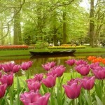 403984 Keukenhof Holanda jj 150x150 Jardins mais famosos do mundo: fotos