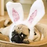 407901 24 150x150 Cachorros: fotos engraçadas