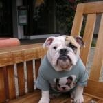 407901 40 150x150 Cachorros: fotos engraçadas