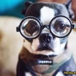 407901 charactercutedogphoto 8294d1e322caff68fb822027f9045b99 h 150x150 Cachorros: fotos engraçadas