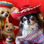 407901 fotos engraçadas animais imagens 029 150x150 Cachorros: fotos engraçadas