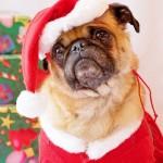 407901 fotos engraçadas animais imagens 142 150x150 Cachorros: fotos engraçadas