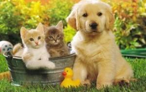 Animal de estimação: como escolher o ideal