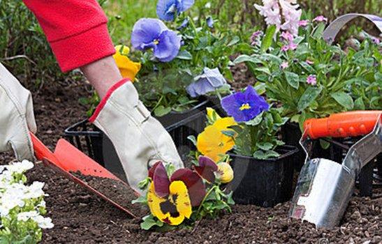 flores cheirosas jardim ? Doitri.com