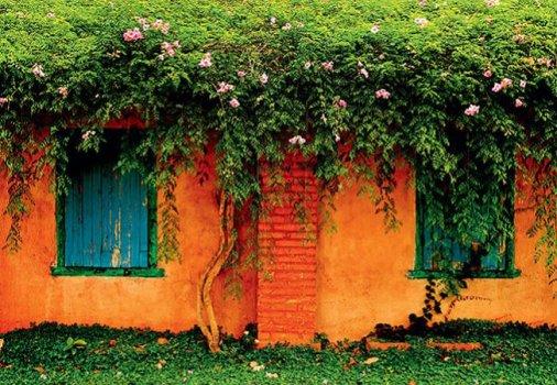 decorar o jardim:Trepadeiras para decorar o jardim 1