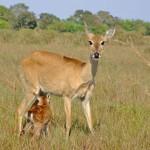 425876 Mães e filhotes na natureza fotos 21 150x150 Mães e filhotes na natureza: fotos